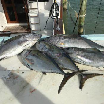 Fishing-Charters-in-Islamorada