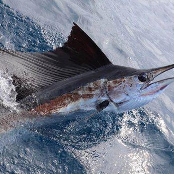 Islamorada-Fishing-Charter